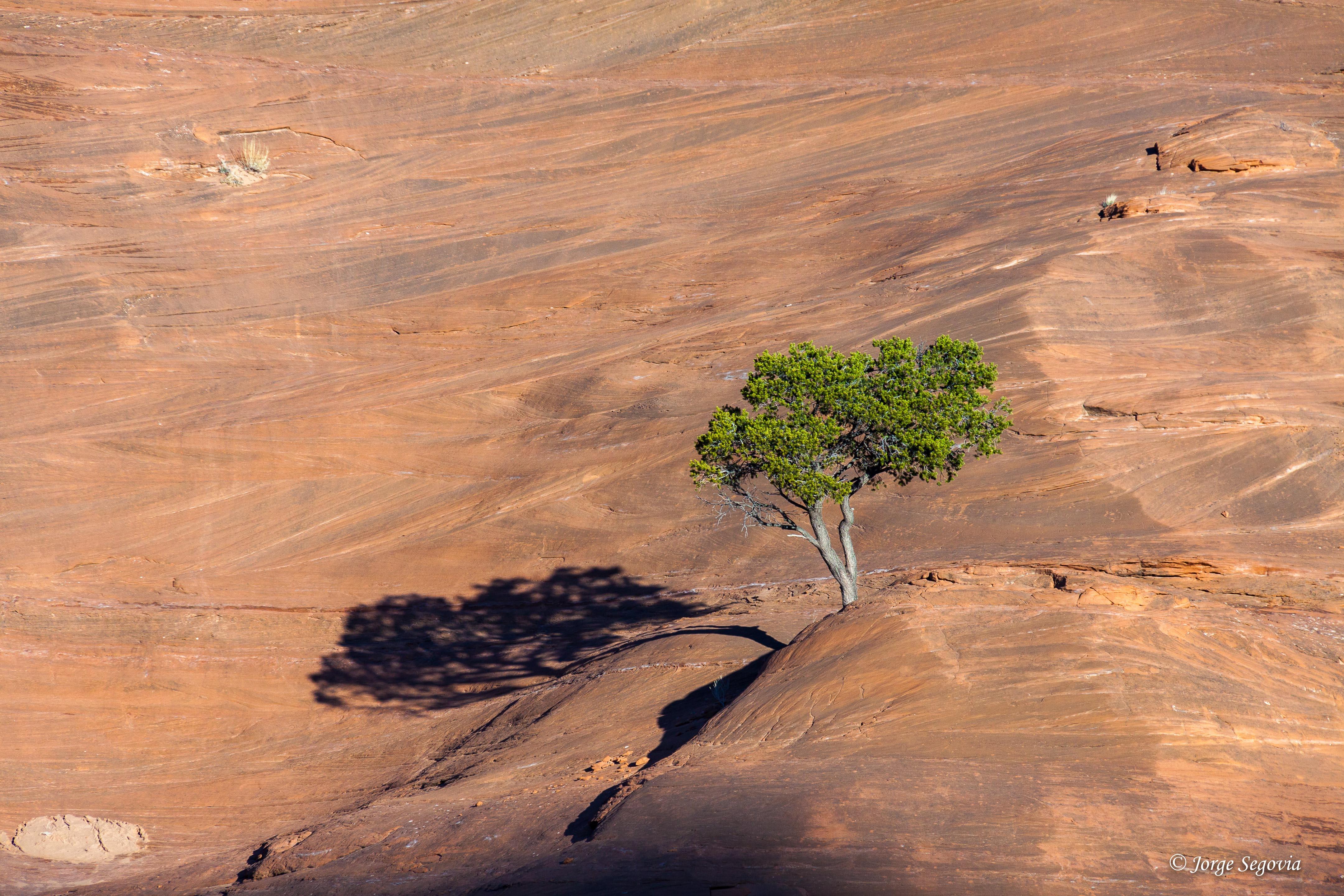Árbol en Gallup, la tierra de los indios navajos.
