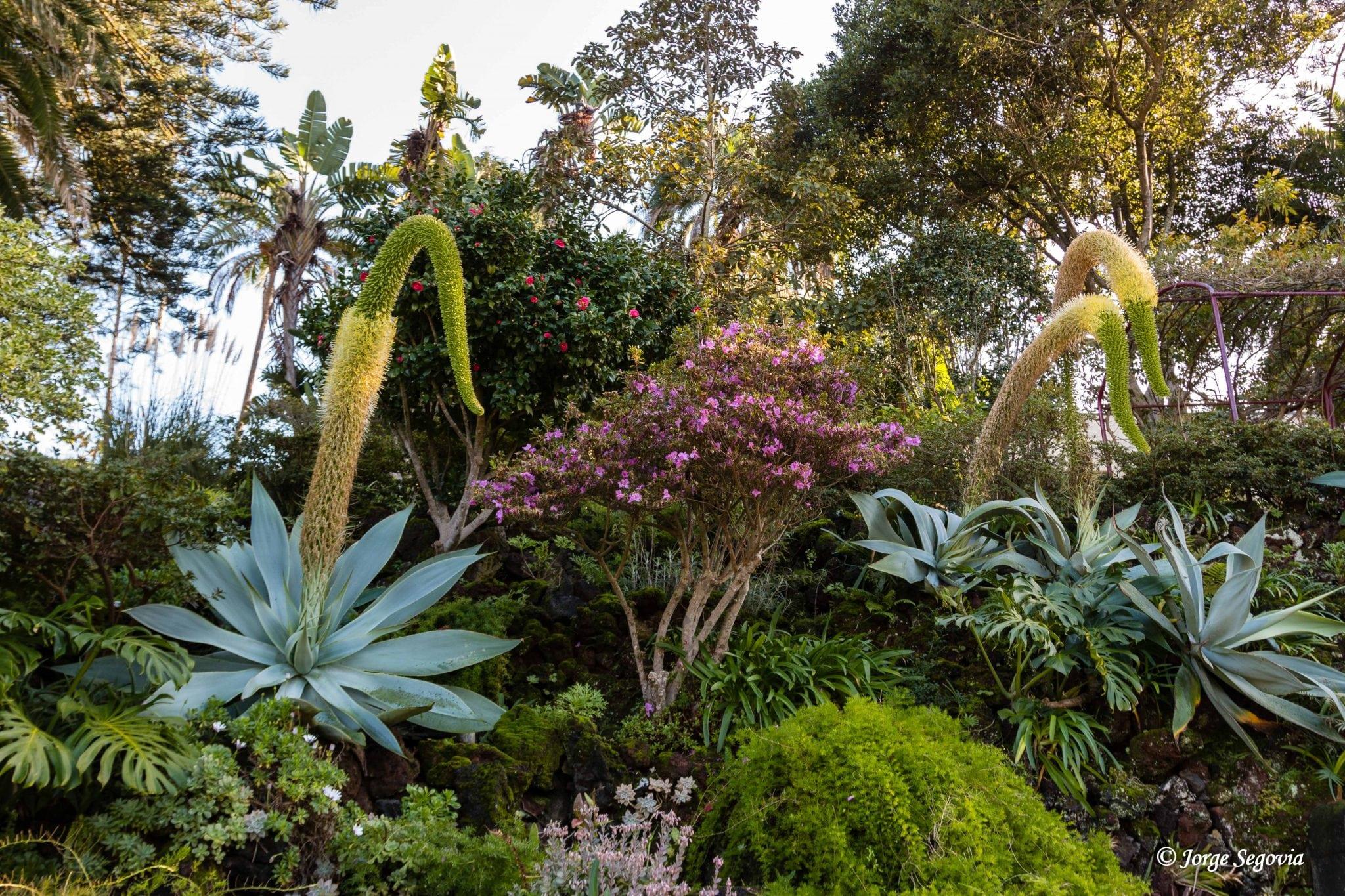 Jardín botánico de Terceira