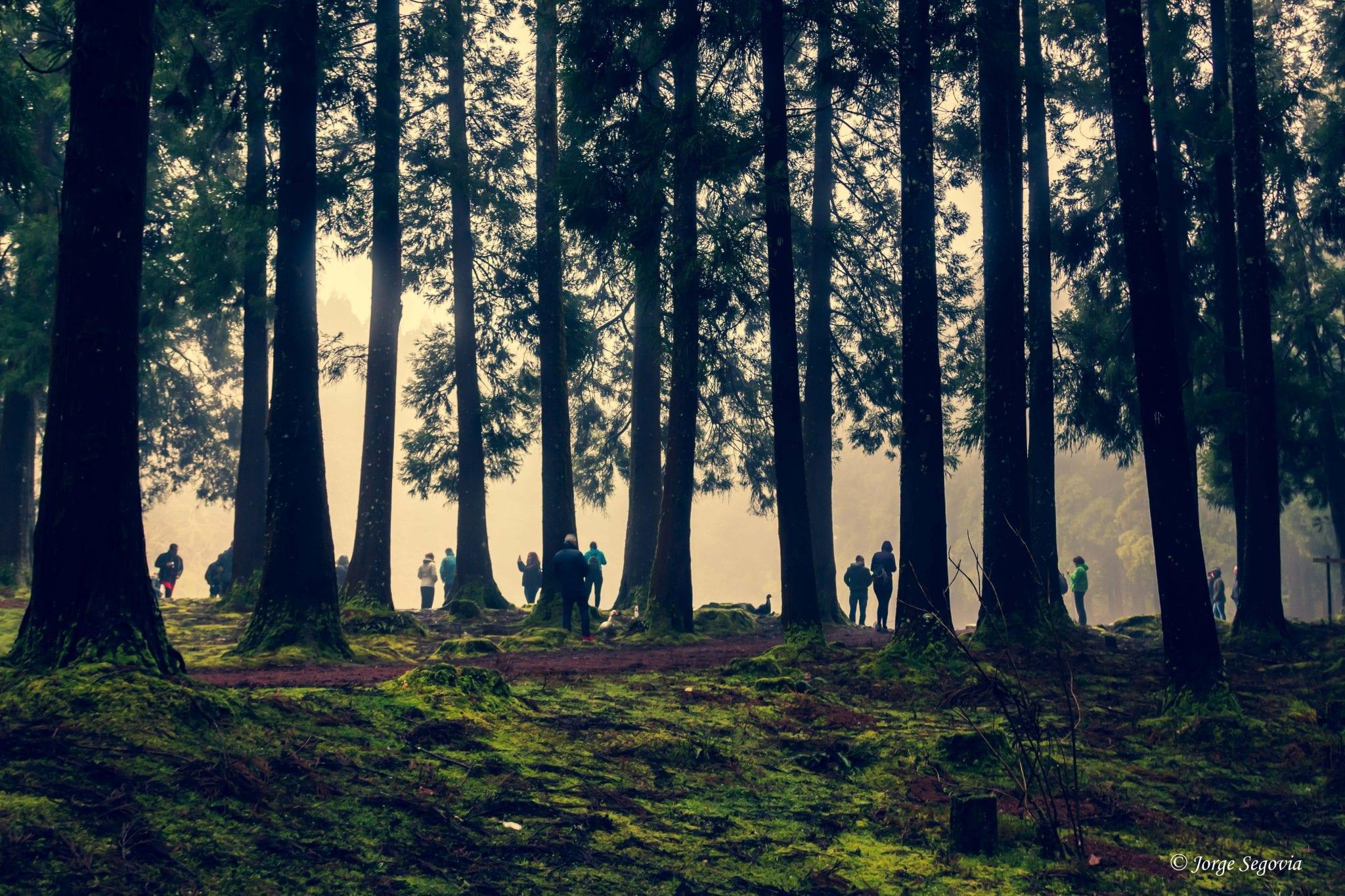 Bosques de Terceira