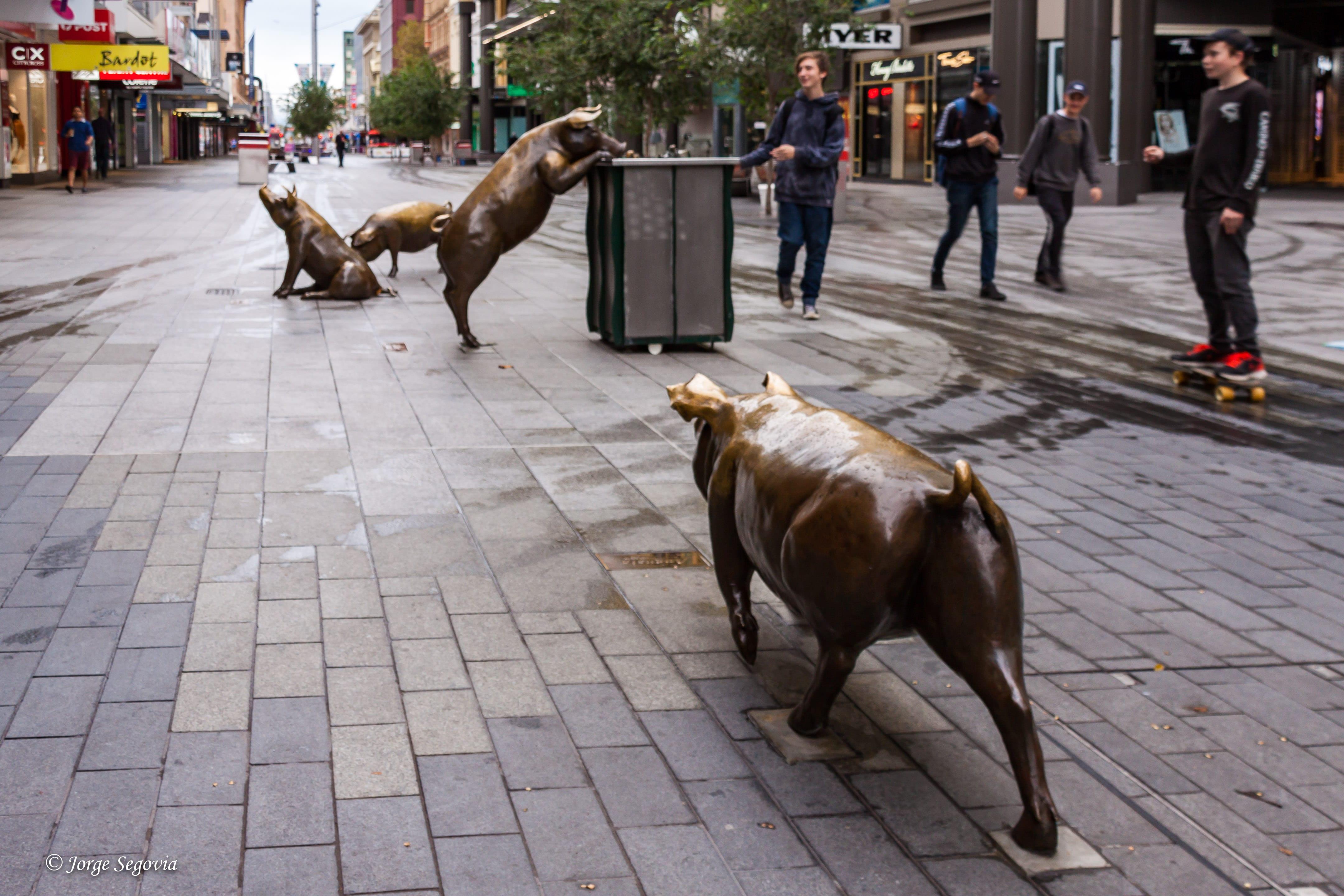 Animales en las calles