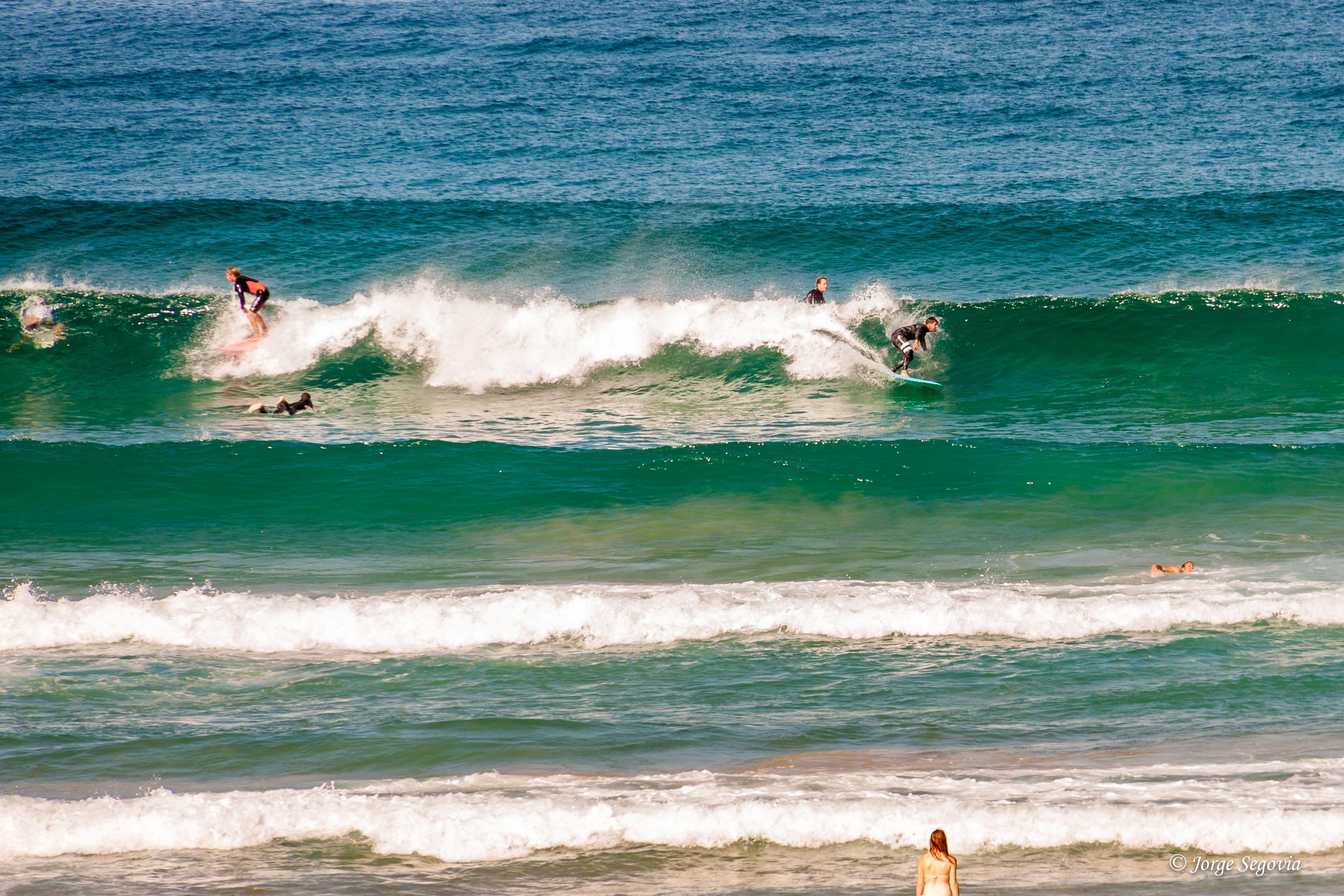 Surfistas en Bondi