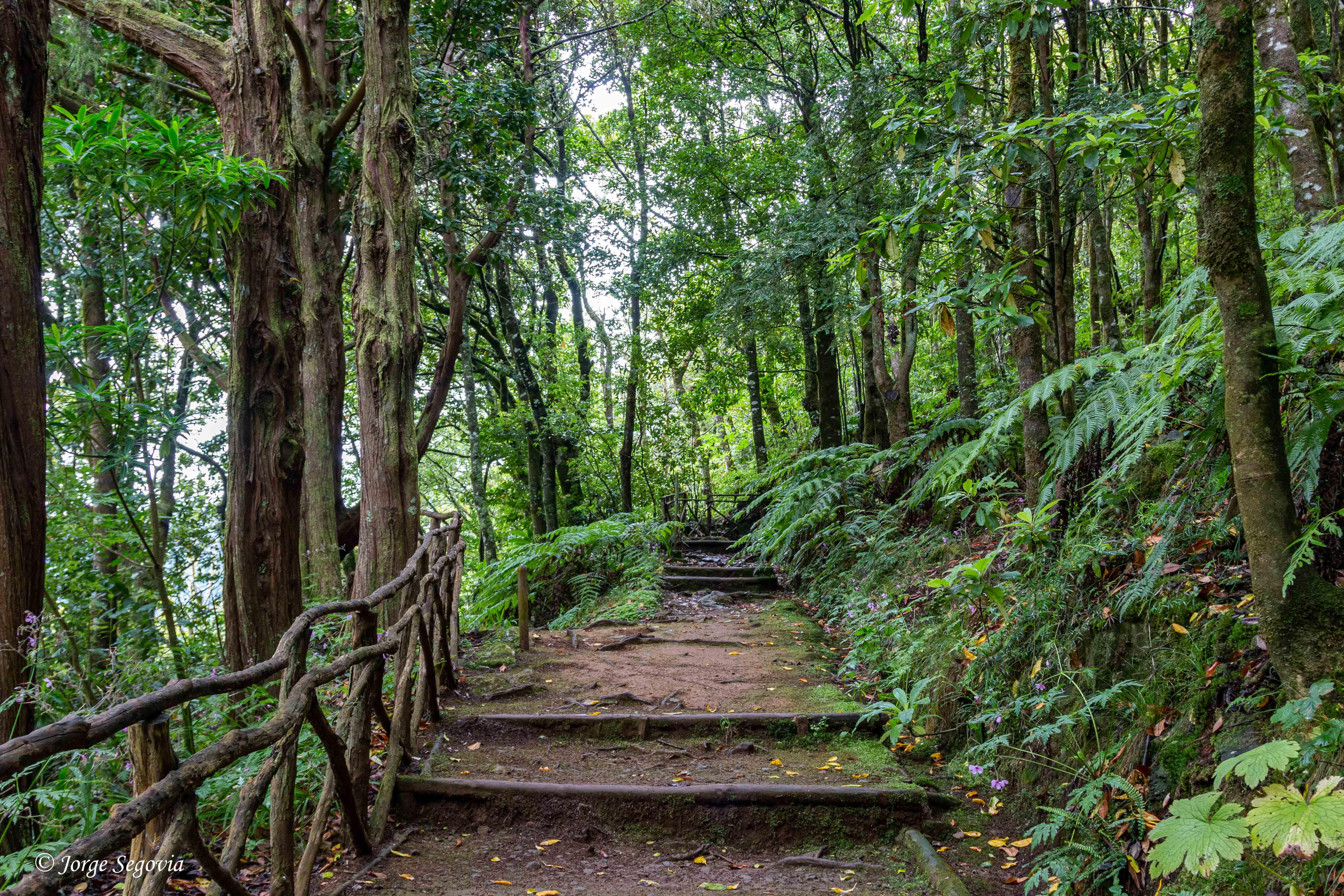 Bosques de Laurisilva en Madeira